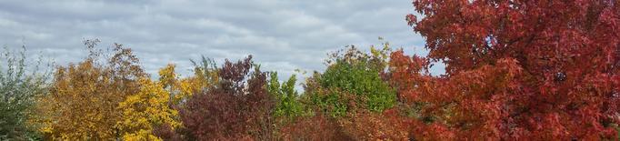 L'Arborètum, un espai on gaudir i observar la diversitat vegetal