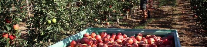 Arxiu fruita collita poma