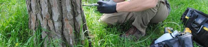 Objectiu: salvar la pineda de Bell-lloc afectada per fongs
