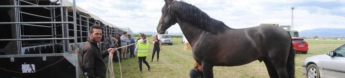 Cavalls de França, Guatemala i Suïssa, en el primer EquiMollerussa