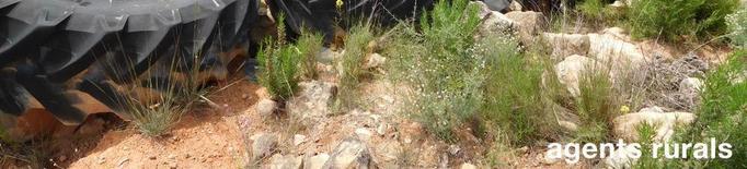 Investiguen l'abandó de 17 pneumàtics a Bovera