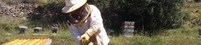 Més ruscos però menys producció de mel a Lleida