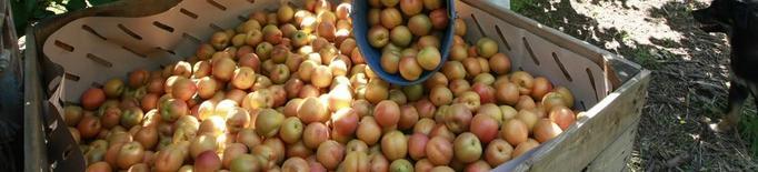 UP denuncia el preu a la baixa de la fruita de pinyol a l'inici de campanya