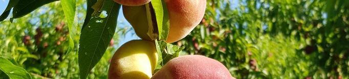 Acusen la distribució de pressionar per frenar els preus de la fruita