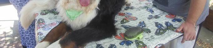 Un donatiu garanteix les sessions de teràpia canina de l'Espígol de Cervera