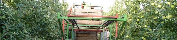 Agroseguro incrementa el preu màxim assegurable de la fuji i de la pink lady