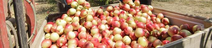 Préssec i nectarina quadrupliquen el preu des del camp fins a la taula