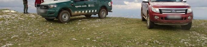 Investiguen l'atac de tres gossos a 600 ovelles
