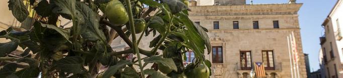 Tomatera a la plaça Major de Cervera