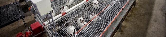 El sector del conill, en crisi malgrat la pujada de preus