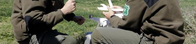 Utilitzen drons per a la prevenció de la pesta porcina africana