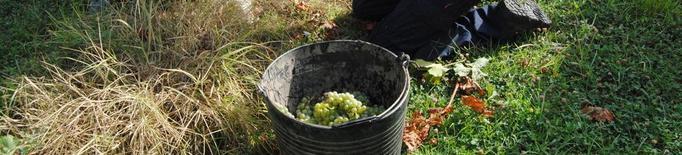 Costers del Segre suposa el 3% del vi amb DO venut a Catalunya