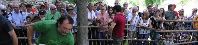 La tradicional Xollada d'Ovelles de Sort celebra el trentè aniversari