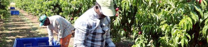 Els pagesos apliquen el Salari Mínim de manera correcta