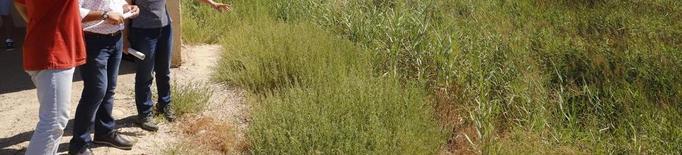 La Paeria destinarà finques de Rufea amb 55 ha a pastura per a ovelles