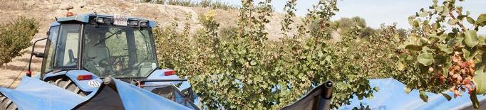 El reg avança un any el cultiu del pistatxo al Segarra-Garrigues