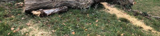 Esterri estrena una tronca gegant i la fira de Nadal