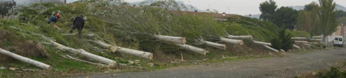 Queixes per la tala de 50 pollancres a Alfarràs feta a petició de diversos veïns