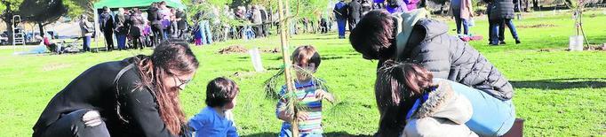 Nous arbres per al Bosquet de Palauet