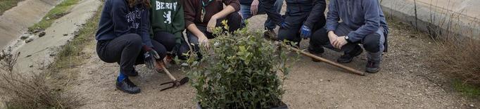 Reforesten dotze hectàrees per recuperar fauna i flora