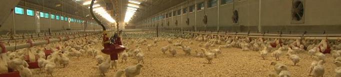 Bon 2019 per al sector de l'ou i problemes al pollastre