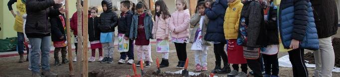 Planten una cinquantena d'arbres en patis escolars