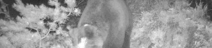 Els óssos surten del confinament