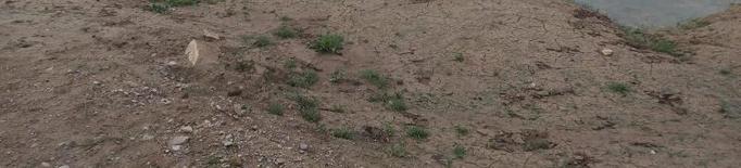 Les pluges tornen a inundar el jaciment iber d'Arbeca