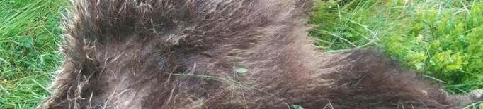 La Fiscalia francesa investiga la mort d'un ós a trets