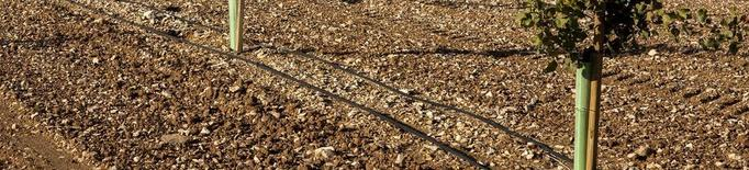 Borges podrà tractar cada any a Tàrrega mil tones de pistatxos