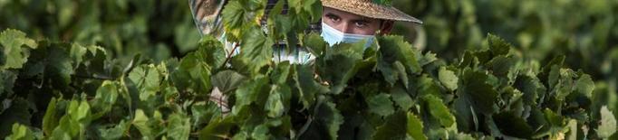 El fre en grans mercats posa en alarma el sector del vi
