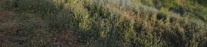 La Paeria subhasta finques a Rufea per destinar-les a pastura de bestiar