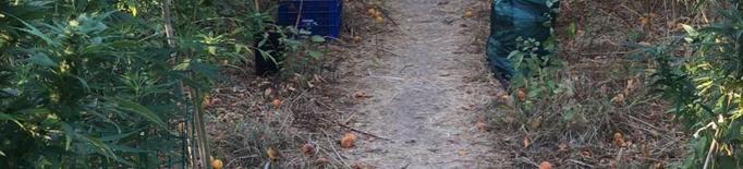 Detinguts per conrear maria entre arbres fruiters a Aitona