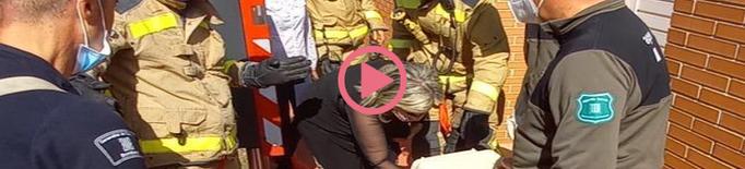 ⏯️ Els Bombers rescaten una iguana d'un arbre