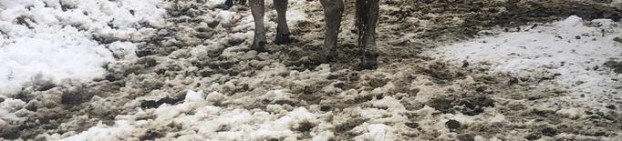 Més nevades al Pirineu i un rescat de 400 vaques a Aran