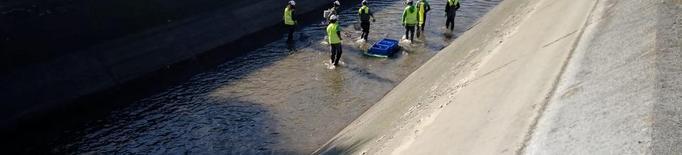 Rescat de peixos abans de buidar el canal de Seròs