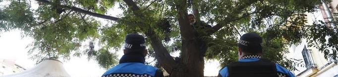 La Paeria estudia salvar l'arbre de Sant Joan