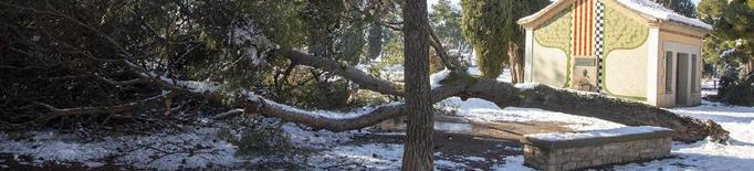 Arbres bolcats i branques partides al Parc de Sant Eloi després de la nevada