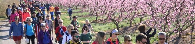 La floració d'Aitona atreu unes 15.000 persones
