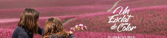 L'espectacle floral al Baix Segrià, un esclat de colors naturals