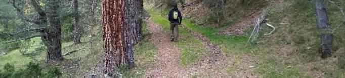 Adjudicades per un milió i mig 40.000 tones de fusta de boscos públics a Lleida