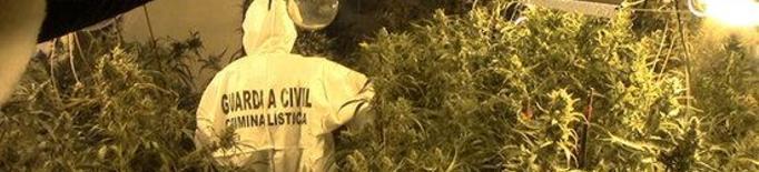 Imatge de la plantació interior de marihuana localitzada per la Guàrdia Civil a l'altell d'un immoble d'Almacelles