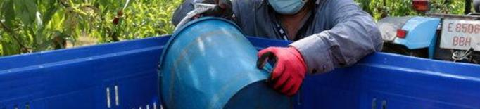 Treballador temporer agrari agrícola agricultura collita fruita préssec nectarina camp finca mascareta