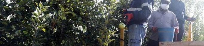 Pla general on es poden veure temporers en una màquina de collir fruita en una finca de Penelles