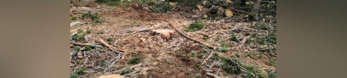 Entitats ecologistes denuncien una tala de bosc en una zona protegida de la Cerdanya