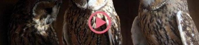 ⏯️ La covid-19 amenaça centres de conservació de la natura i la biodiversitat