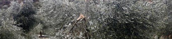 Danys cultius Filomena