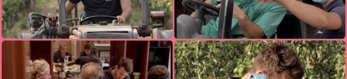 Les 24 hores en la vida d'un productor de pera durant la collita