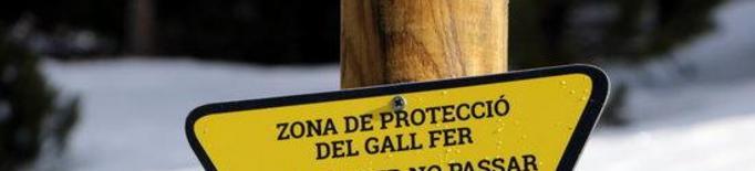 El Parc de l'Alt Pirineu instal·la rètols a Port Ainé per evitar el pas d'esquiadors a zones de protecció del gall fer