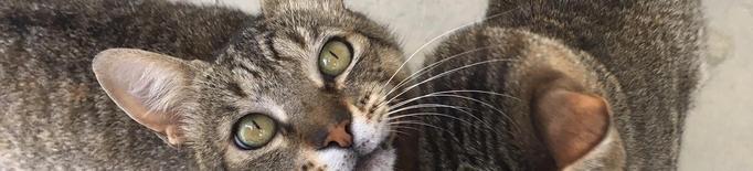 La Paeria començarà al setembre el cens de colònies de gats a Lleida